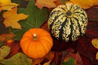 autumn-21554_960_720.jpg